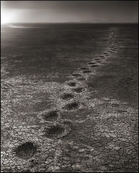 Elephant Footprints, Amboseli, 2012 (final image of Brandt's photo trilogy).