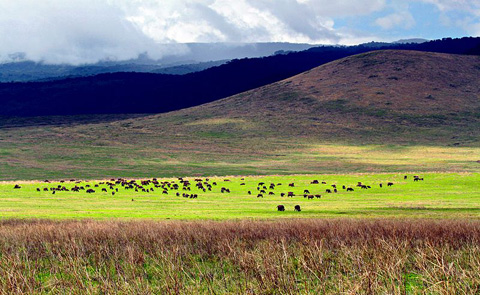 Ngorogoro Crater, Tanzania, the Caldera Valley.
