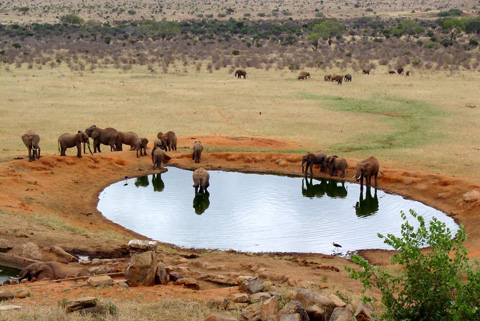 Man made watering hole at the Voi Safari Lodge.