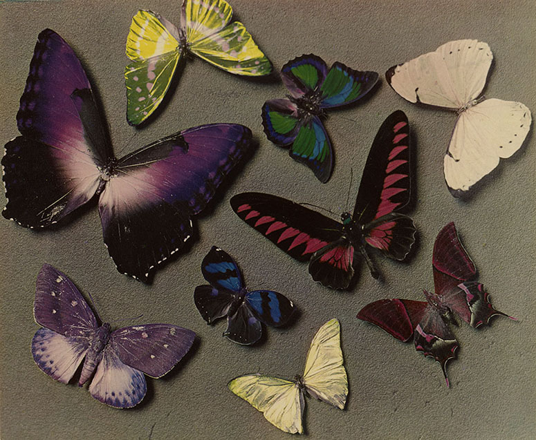 Man Ray's Butterflies