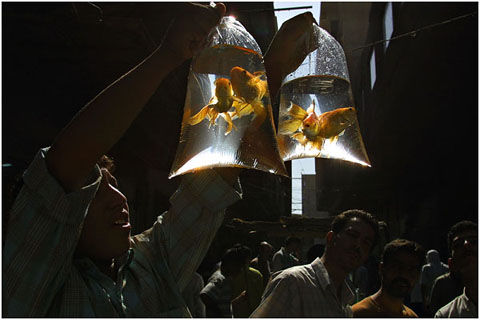 Seller of golden fishes.