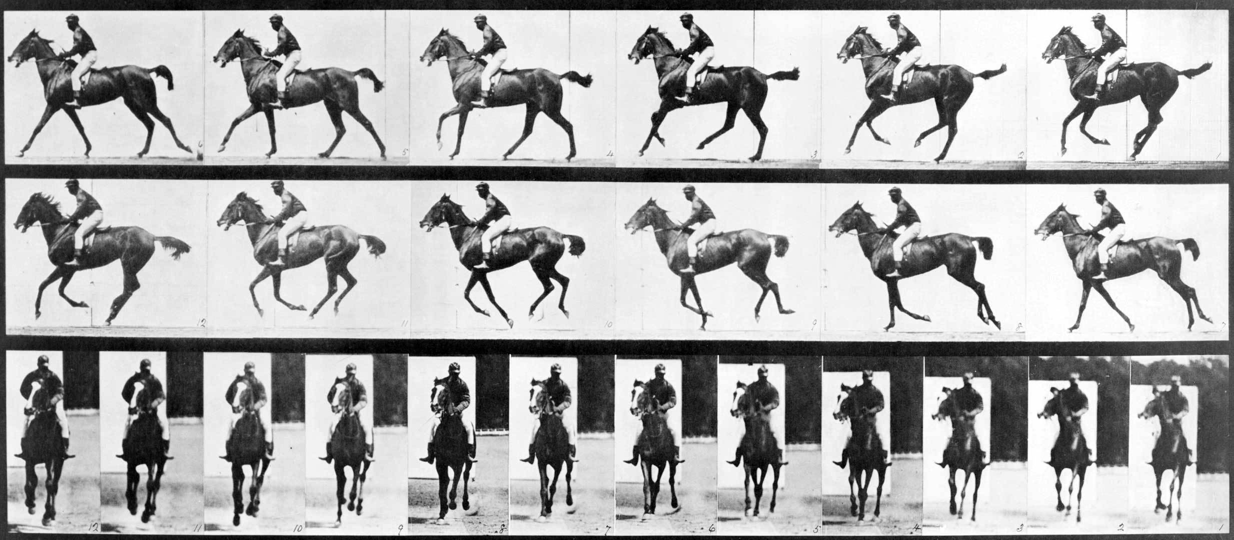 Horse In Motion Eadweard Muybridge