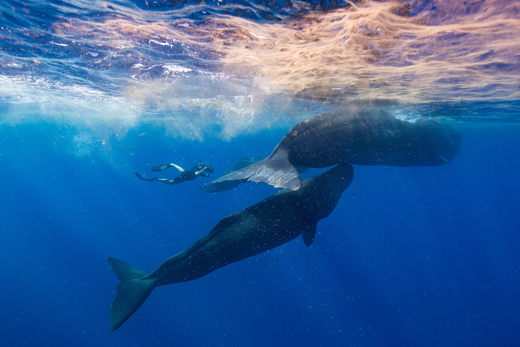 Secrets-of-the-Whales-Featured.jpg?mtime=20210519120240#asset:101376