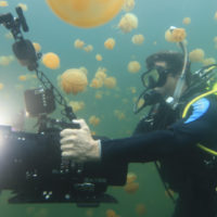 Inside OceanX Part II: Underwater Filming and Lighting