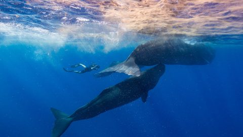 Clubhouse Conversations — Secrets of the Whales