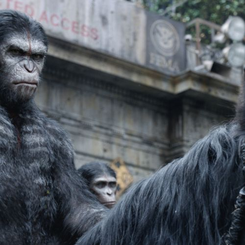 Caesar (Andy Serkis) is the leader of the ape nation.